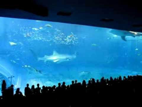 美麗的鯨鯊