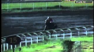 RACE 7 FLYING GEE 11/29/2014