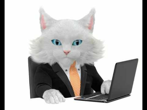 Кот для главной страницы сайта
