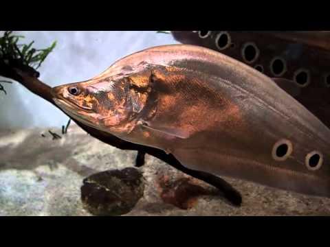 Москвариум, океанариум на ВДНХ, его обитатели (видео)