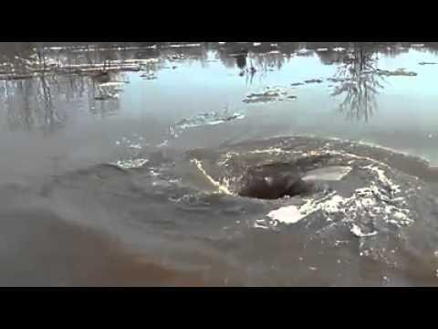 Loch - Schwarzes Loch im Teich www.DivaMap.com.