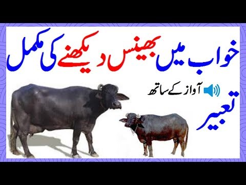 Khawab Ki Tabeer In Urdu Khawab Mein Bhains Dekhna Buffalo Dream Meaning خواب میں بھینس دیکھنا