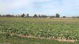 Hmong Farming in Rancho Cordova_P1