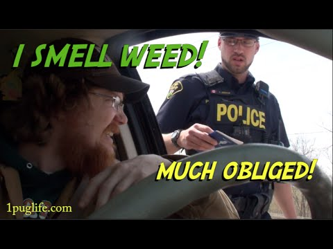 what to do when the cops smell weed!