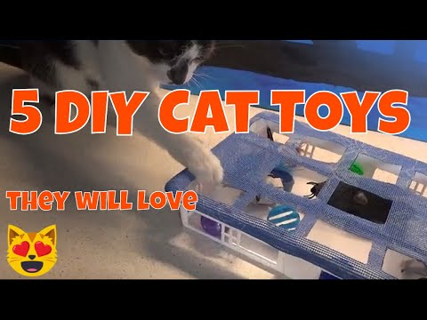 5 DIY Cat Toys You Can Make!