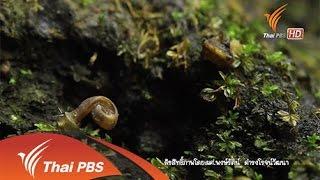 Nature Spy สายลับธรรมชาติ - โลกหลงสำรวจ