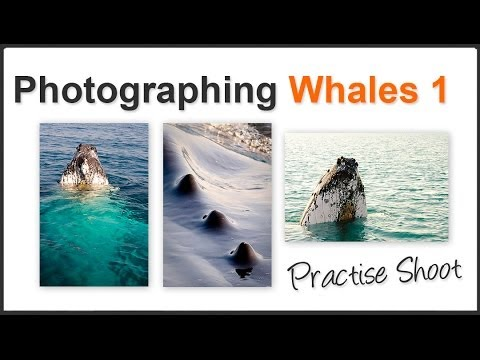 Photography Tips for Whale Watching Pt1 – Photo opportunity of a lifetime