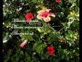 UNA HERMOSA COLECCION DE 16 CANCIONES, BOLEROS, BALADAS Y MUSICA DE PELICULAS FAMOSAS Y ROMANTICAS, INTERPRETADAS Y ARREGLADAS MUSICALMENTE POR EL ...
