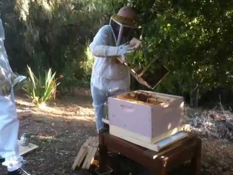 Backyard beekeeping – Making a new hive