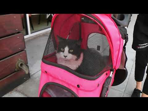 Cat goes for a walk in his buggy