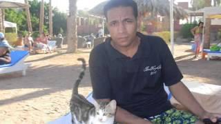 الفنان احمد توفيق والنجم كريم مزيكا فى الغردقة فيديو كليب