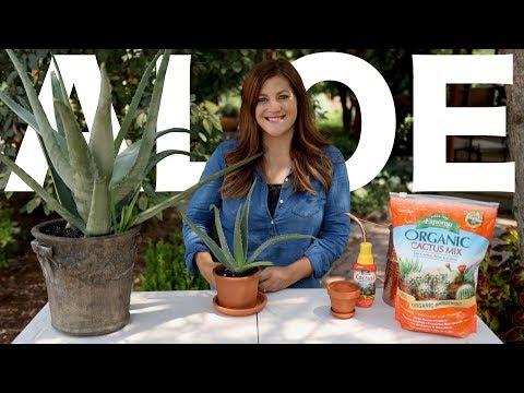 Aloe Vera Care Guide! 🌿🌵// Garden Answer