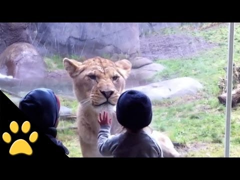 kids - In this funny animal video, tune in to see an awesome compilation of kids interacting with their favorite animals at the zoo. SUBSCRIBE TO PETSAMI: http://bi...