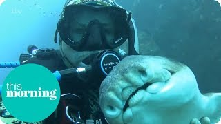 Subscribe now for more! http://bit.ly/1JM41yF Rick Anderson, a Sydney diving instructor, shares how he started a friendship with a...
