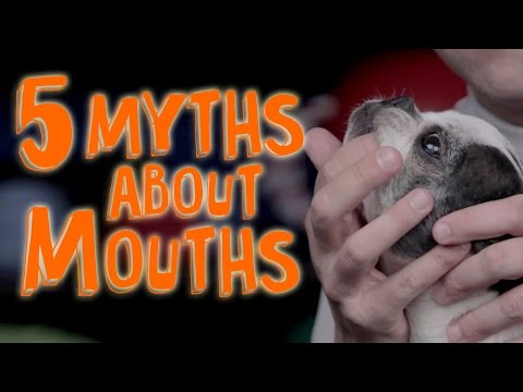 Top 5 Things You Need to Know Before Your Pet Licks Your Face (#2 Involves Poop)