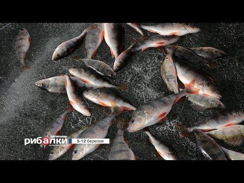 Календар рибалки з 5 по 12 березня 2018 року від телеканалу \Трофей\ - DomaVideo.Ru