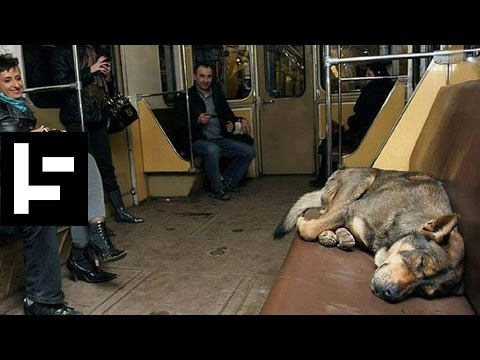 The Stray Dogs on Moscow's Subway