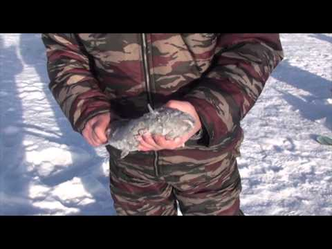 зимния ловля пескаря