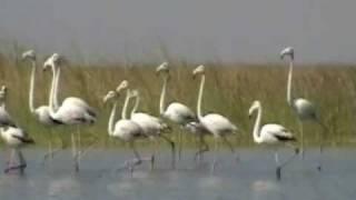 Nalsarovar Lake (Near Ahmedabad) full download video download mp3 download music download