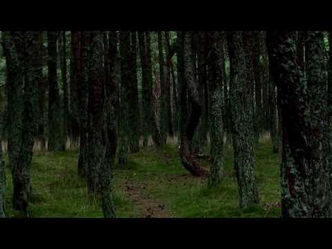 Ky është 'Pylli i Vallëzuar' (Video)