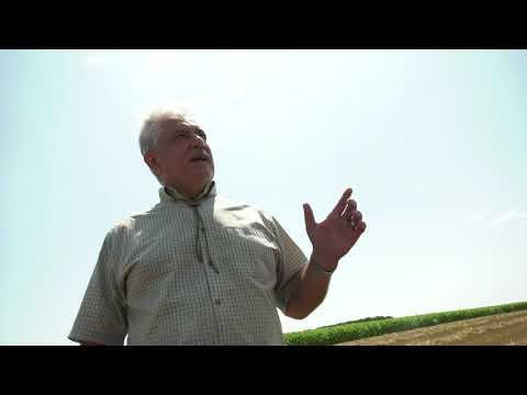Jó termést aratnak idén a környékbeli gazdák