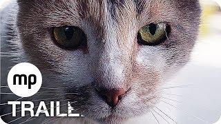 Kedi - Von Katzen und Menschen Trailer German Deutsch (TR 2016, OT: Kedi Trailer) ►Abonniere uns! : http://www.bit.ly/mpTrailer Kinostart: 10.08.2017 Alle In...