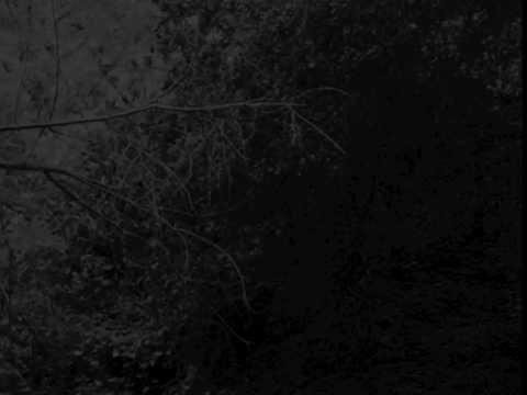Dalot - In Silence