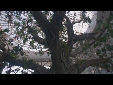 Ντουμπάι: Εγκαινιάστηκε τροπικό πάρκο στη μέση της ερήμου