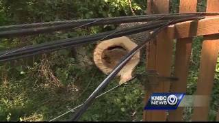 In this case - the call to an Arborist can save you money in the long run.Subscribe to KMBC on YouTube now for more: http://bit.ly/1fXGVrhGet more Kansas City news: http://kmbc.comLike us:http://facebook.com/kmbc9Follow us: http://twitter.com/kmbcGoogle+: http://plus.google.com/+KMBC