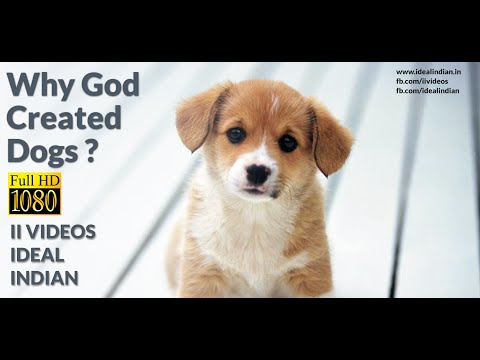 Why God Created Dogs? A Lovely Story About Dogs Love For Man