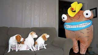 Funny Dogs vs Creepy Monster Prank: Funny Dogs Maymo, Penny & Potpie by Maymo