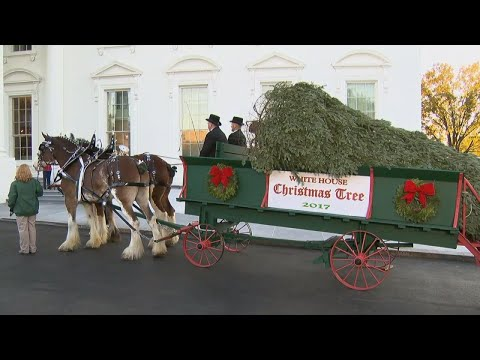 Barron and Melania Trump Welcome White House Christmas Tree