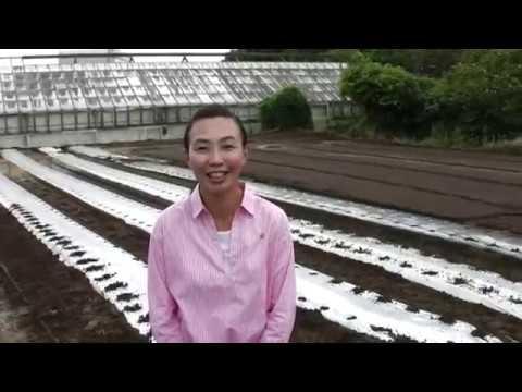 こしいしかつ子市政報告4