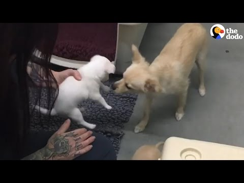 Mom Dog Reunited With Her Babies | The Dodo