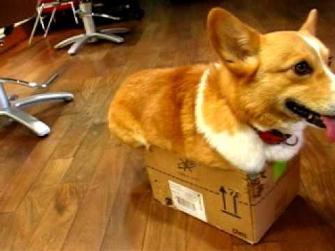 我就愛在箱子裡,別抓我
