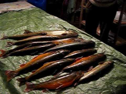 Pêche miraculeuse de truite dans le Grand Nord du Québec