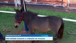Cavalos da raça mini-horse chamam atenção dos visitantes da Facilpa