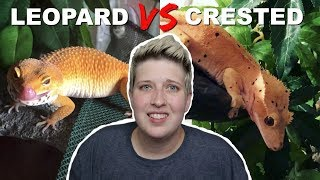LEOPARD GECKO VS CRESTED GECKO   Which is the better pet? by Pickles12807