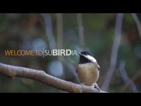Make Your Yard More Bird-Friendly