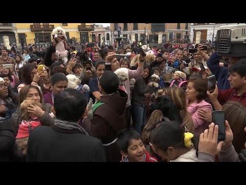 Περού: Ευλόγησαν τα ζώα τους