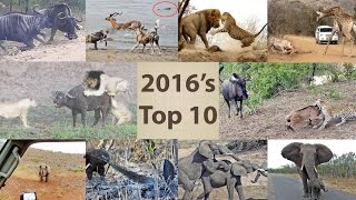 Nonton This Year S Top 10 Wildlife Sightings   Compilation Film Subtitle Indonesia Streaming Movie Download