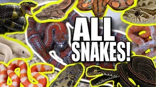 HOW MANY SNAKES CAN I SHOW YOU IN ONE VLOG?? Brian Barczyk by Brian Barczyk