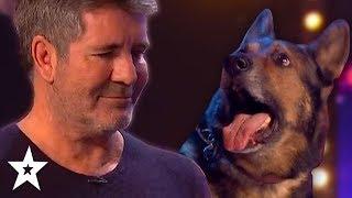 Video DOG Magician Makes Simon Cowell CRY On Britain's Got Talent 2019! | Got Talent Global MP3, 3GP, MP4, WEBM, AVI, FLV Mei 2019