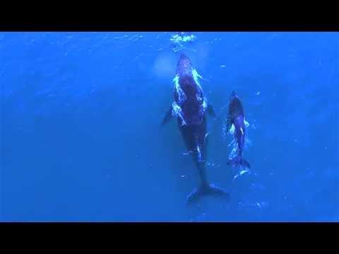 Moeder  bultrug en dolfijn laten kids samen spelen