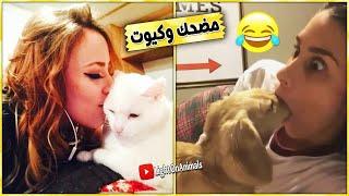 Video قطط وكلاب مضحكة جدا 😂 -اضحك حتى البكاء على القطط والكلاب (حيوانات مضحكة) #1 MP3, 3GP, MP4, WEBM, AVI, FLV Oktober 2018
