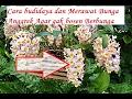 Cara budidaya dan Merawat Bunga Anggrek Agar Rajin Berbunga