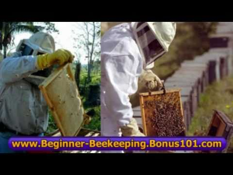 beekeeping books lessons tutorial – beginner beekeeping