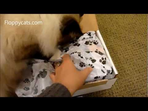 0 Petflow.coms Spoiled Rotten Box Cat Gift Box Subscription