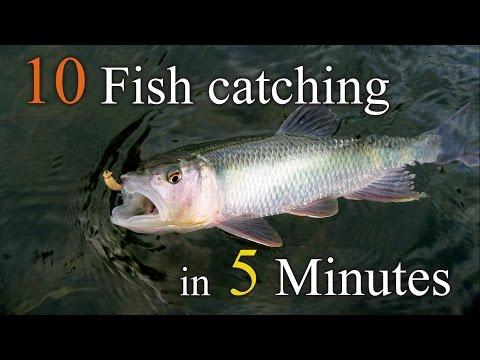 10 Fish catching  in 5 minutes ( 5분내에 10마리낚기) - Thời lượng: 8 phút, 38 giây.