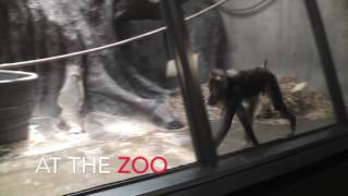 Zoochosis in Cleveland